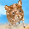 Беги мышка беги