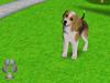 101 puppy pets screenshot small0 101любимчик. Играем с щенятами