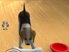 101 puppy pets screenshot small5 101любимчик. Играем с щенятами
